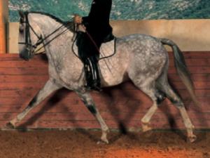 hoge-oprichting-paard