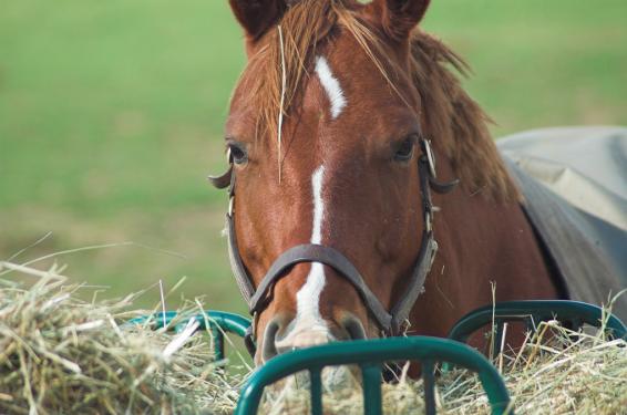 voeding-paard