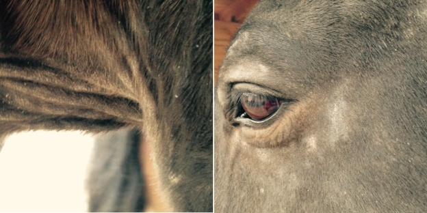 maneneczeem-paard