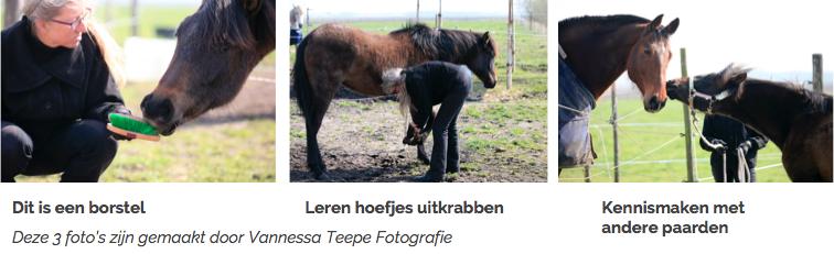 beleren-jong-paard