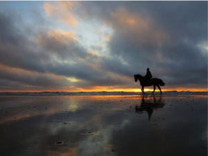 strandrit-paard