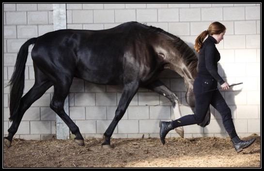 yacinta-feringa-horseconnect