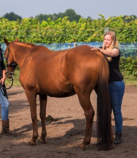 energetische-therapie-paard