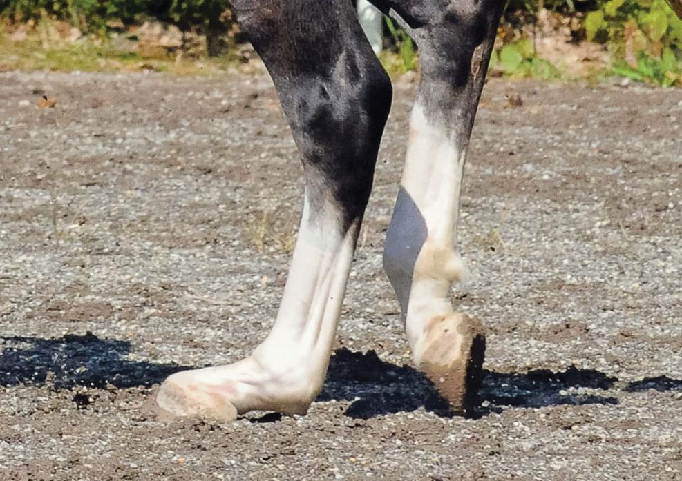 hypermobiliteit-kogel-paard
