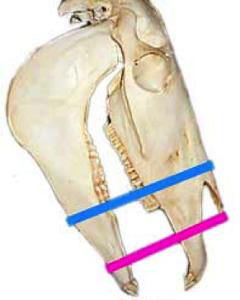 anatomie-neusriem