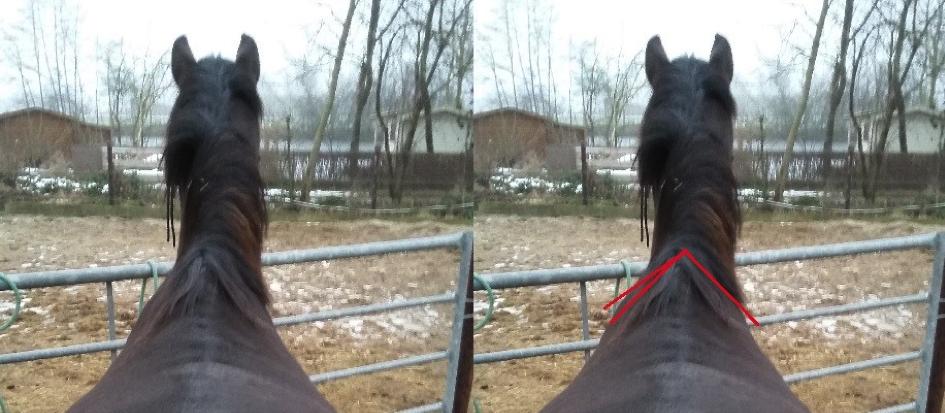 schouder-scheefheid-paardd