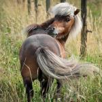 Help, mijn paard heeft last van voorjaarskriebels!