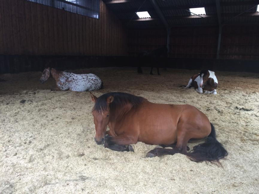 angst-stress-paard
