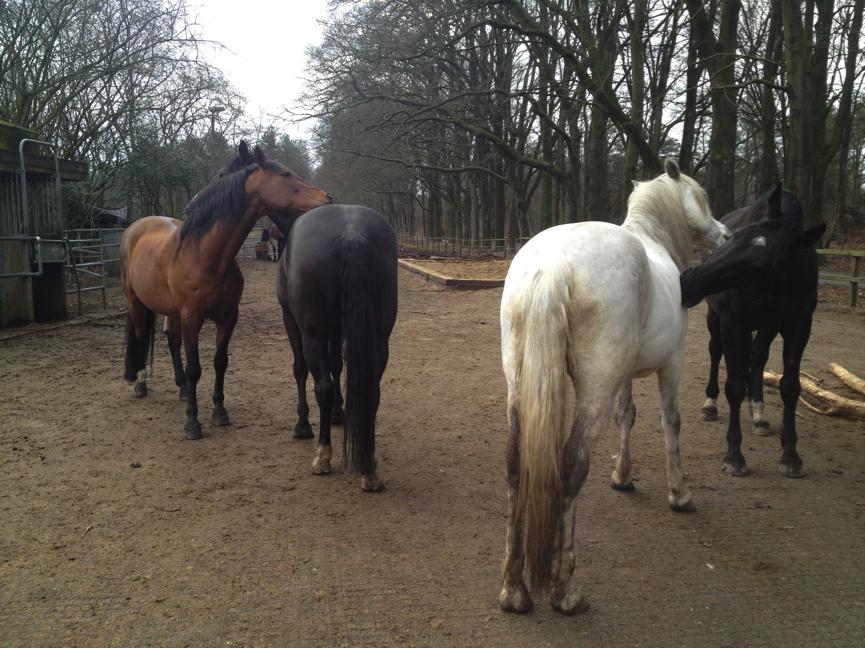 sociaal-contact-paard