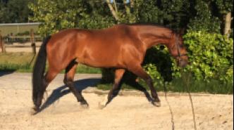balans-paard-longeren
