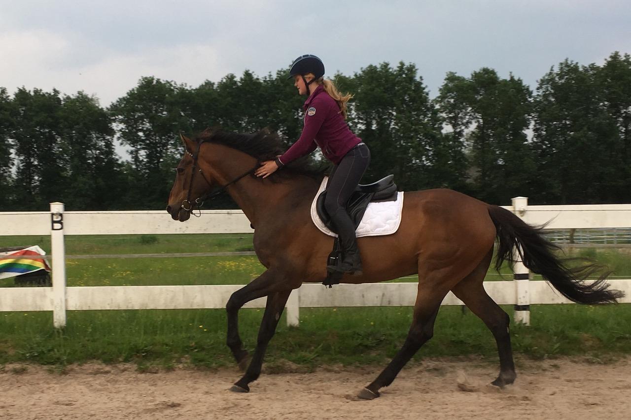 belonen-paard