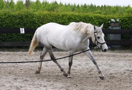 binnenschouder-longeren-paard