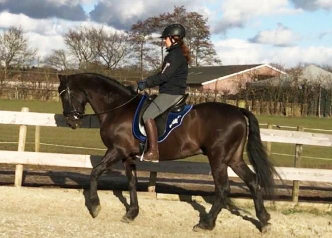 hypermobiel-paard