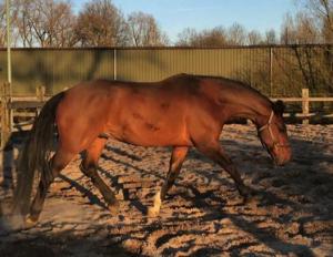 paard-balans