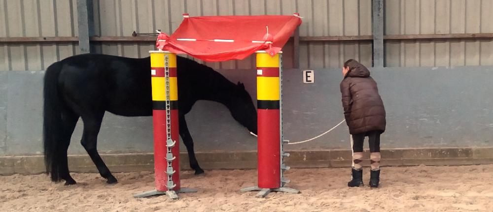 schriktraining-paard