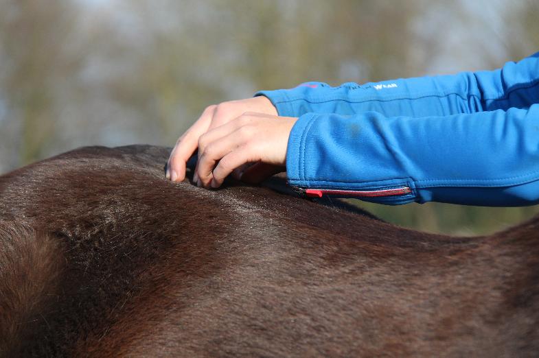 scheef-bekken-paard