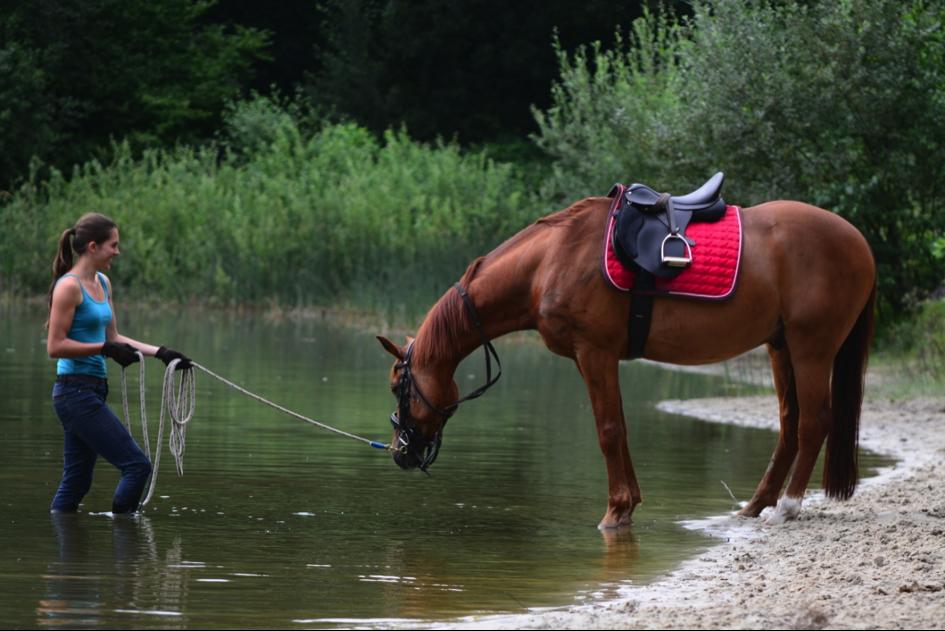 dominantie-angst-paard