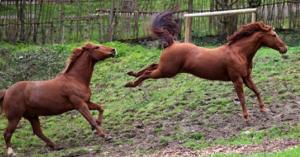 paard-trap