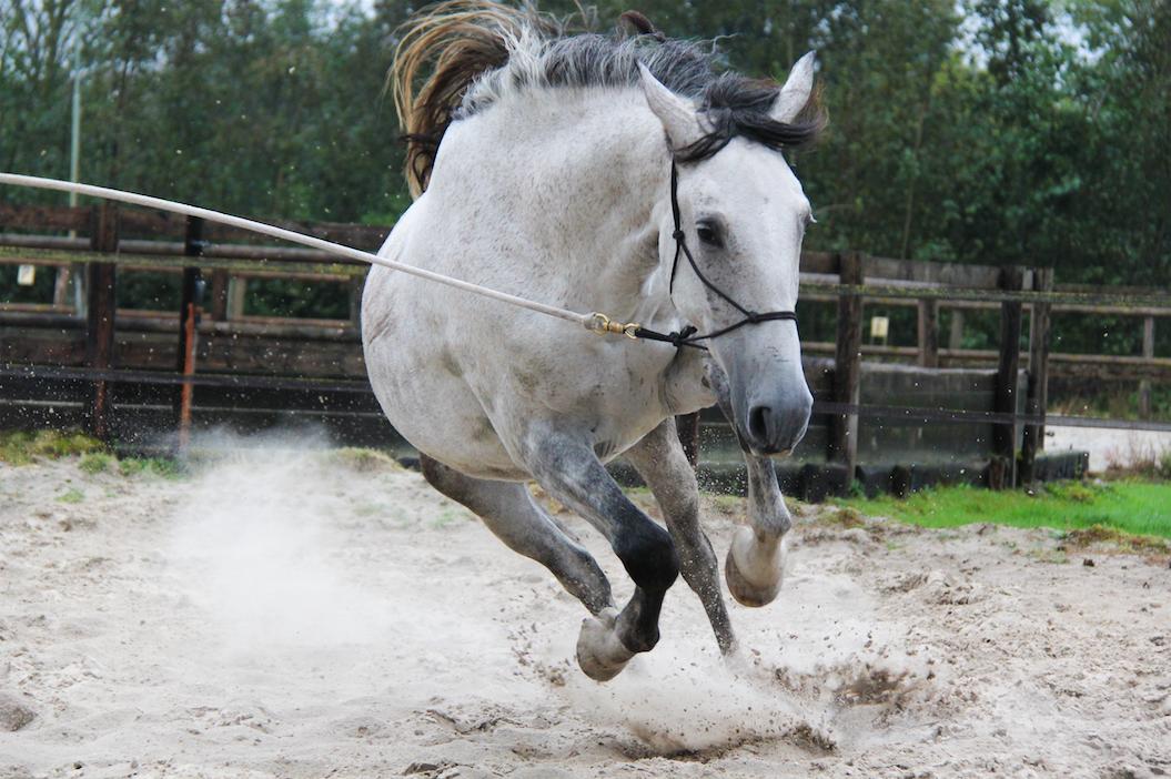 paardensport-gevaarlijk