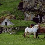 Paarden met jeuk – een holistische benadering