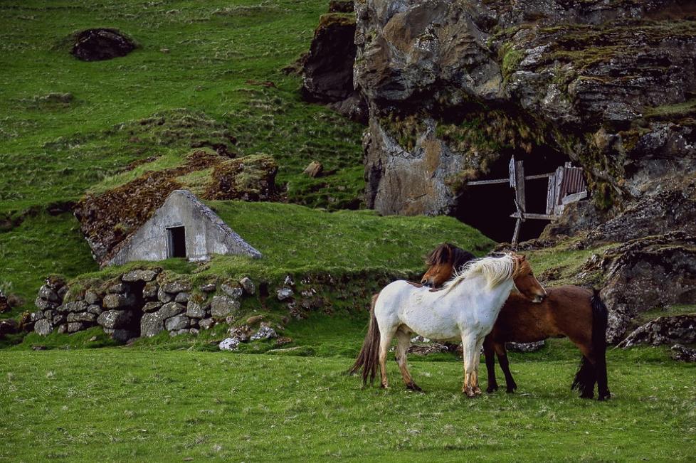 jeuk-paard