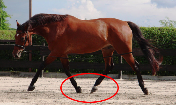 paard-balans-longe