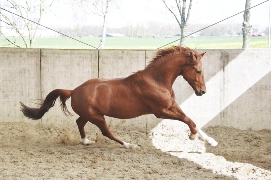 balans-paard
