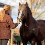 Mag jouw paard nee zeggen?