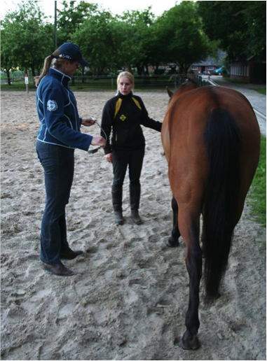 instructie-paard