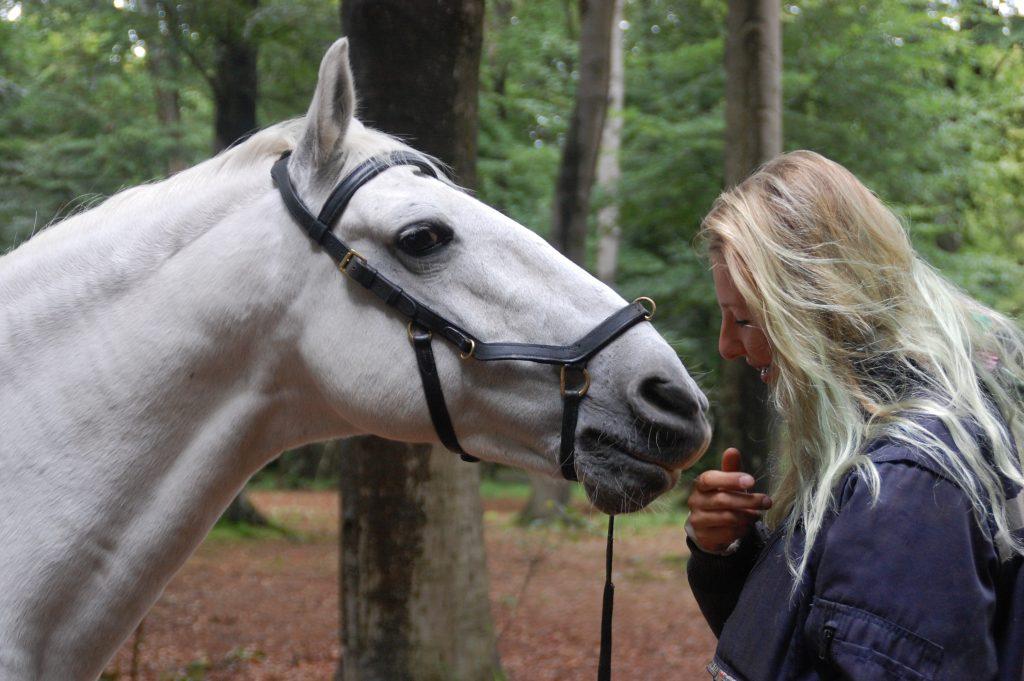 leiderschap-paard