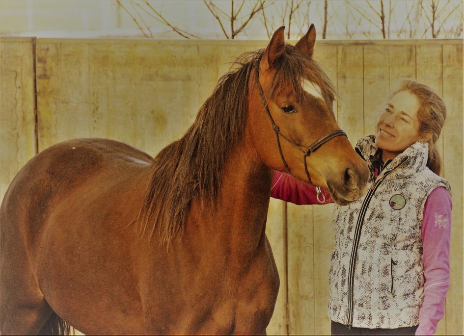 watertype-paard