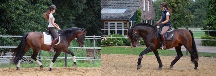 training-paard