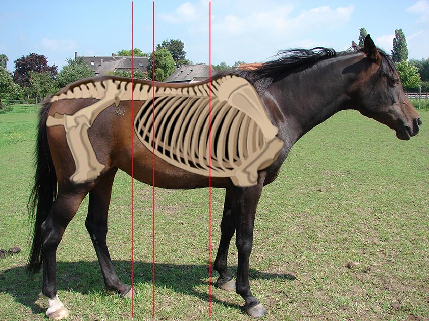 chianta-korte-rug-met-lijnen-horse-connect
